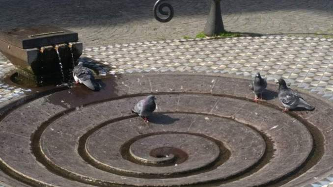 Taubenbrunnen am Dom