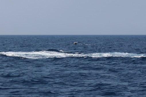 Walvis gespot! (3)