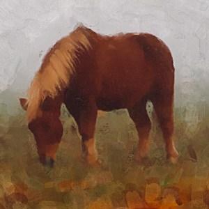 Im frühen Morgen grast das Pferd am oldenstädter See. Atelier 10, Christian Körtke