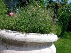 Blumentopf im Loibnerhof der Familie Knoll in Dürnstein in der Wachau