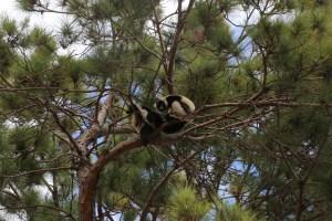 lemurpark 13