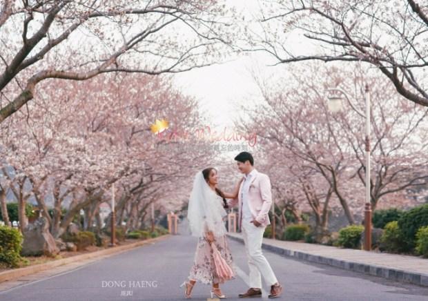 Camelias Jeju pre wedding photo 2