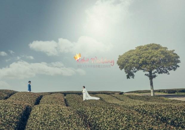 Camelias Jeju pre wedding photo 34