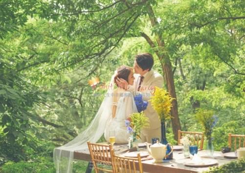 Korean Pre Wedding -Camelias in Seoul 11