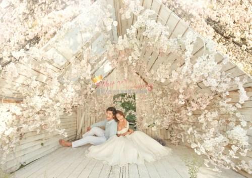 Korean Pre Wedding -Camelias in Seoul 22