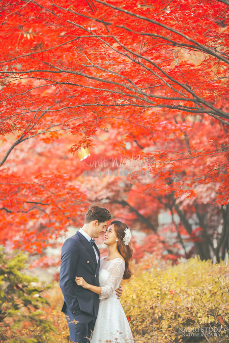 fall-(1)