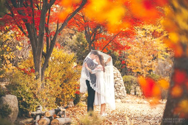 fall-(5)