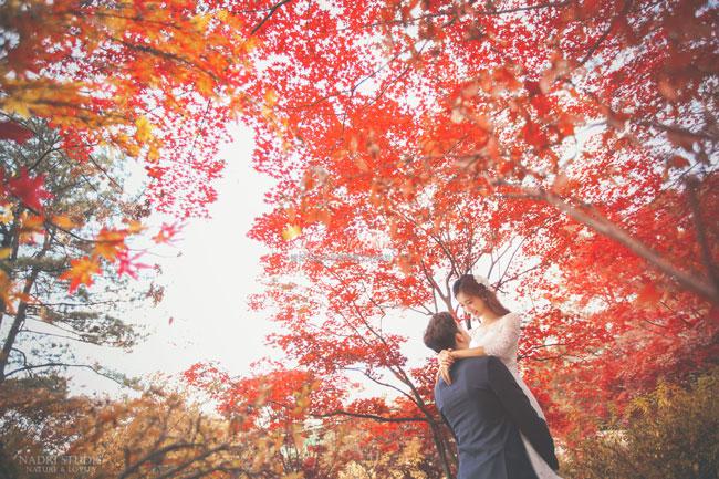 fall-(6)