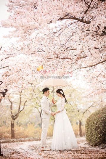 cherry blossom pre wedding in korea