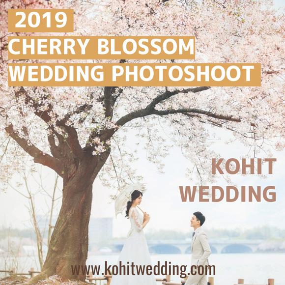 Cherry blossom korea pre wedding