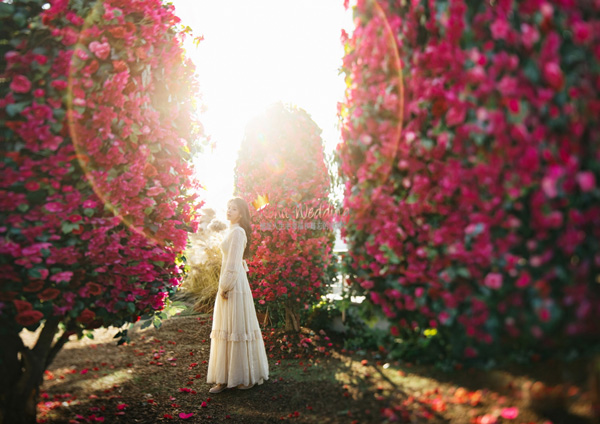 May Studio Korea Pre Wedding Kohit Wedding 19