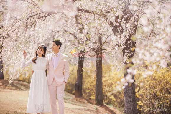 kohit-wedding-korea-pre-wedding-cherry-blossom-14