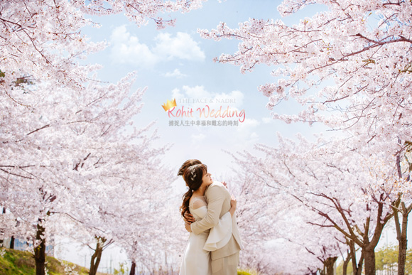 kohit-wedding-korea-pre-wedding-cherry-blossom-7