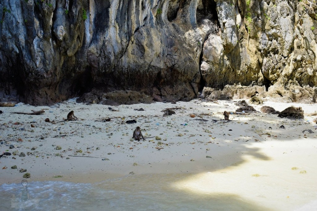 Monkey Beach Phi Phi Islands Thailand