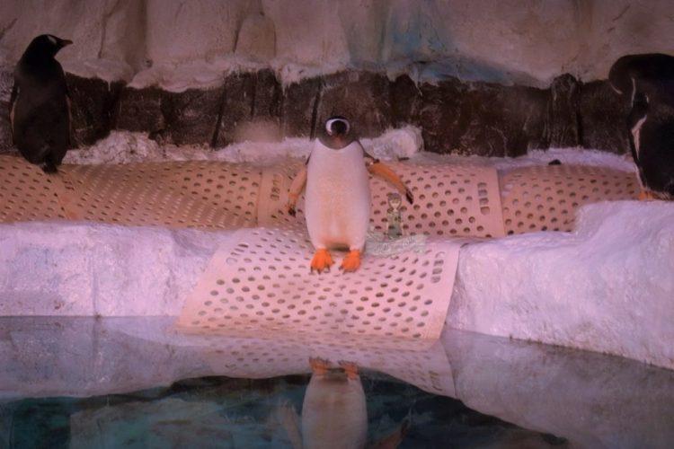 Penguins in Sealife Ocean world