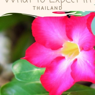 What to expect in Thailand - Bangkok - Phuket - Krabi - Pattaya