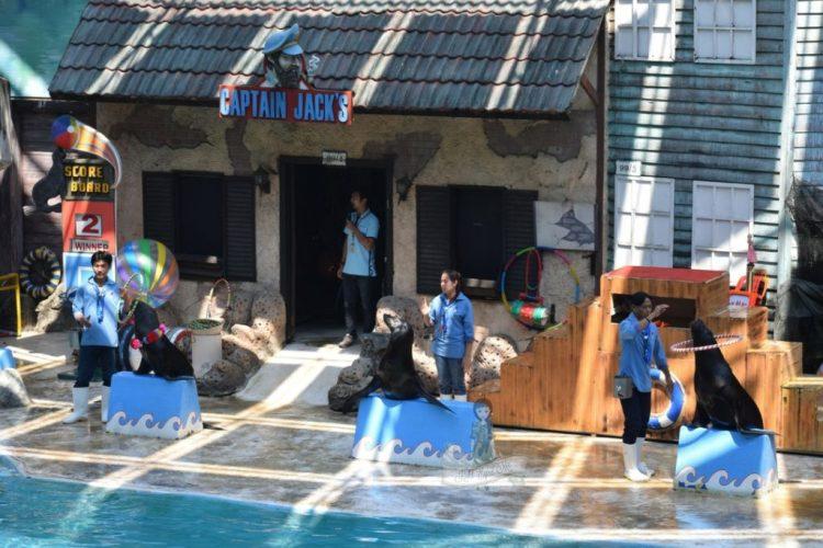 Sea Lion Show Safari World