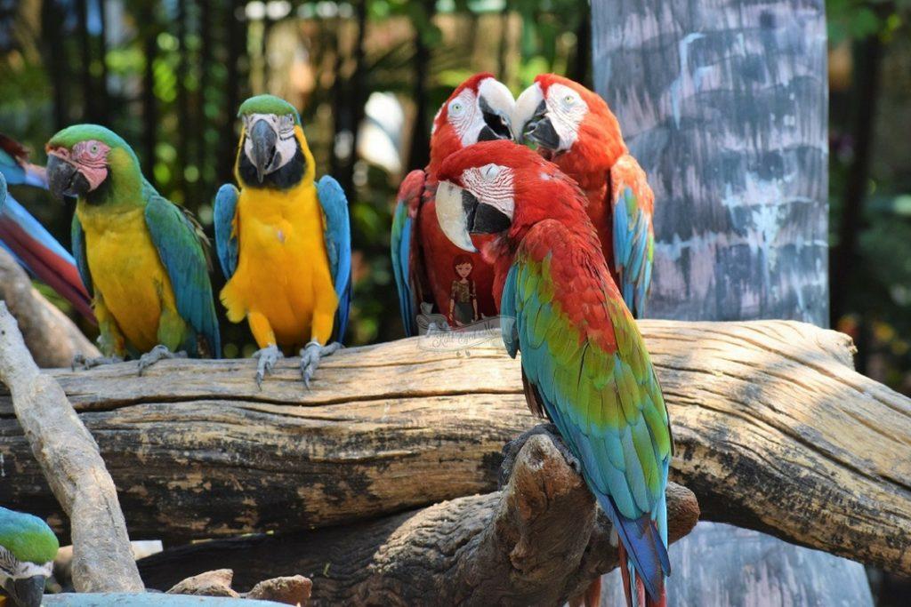 Parrots Safari World