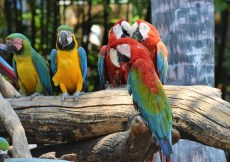 Parrots Safari World