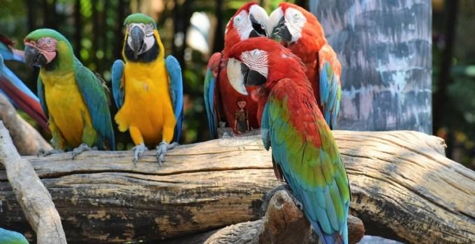 Safari World, Bangkok is not just a Zoo!
