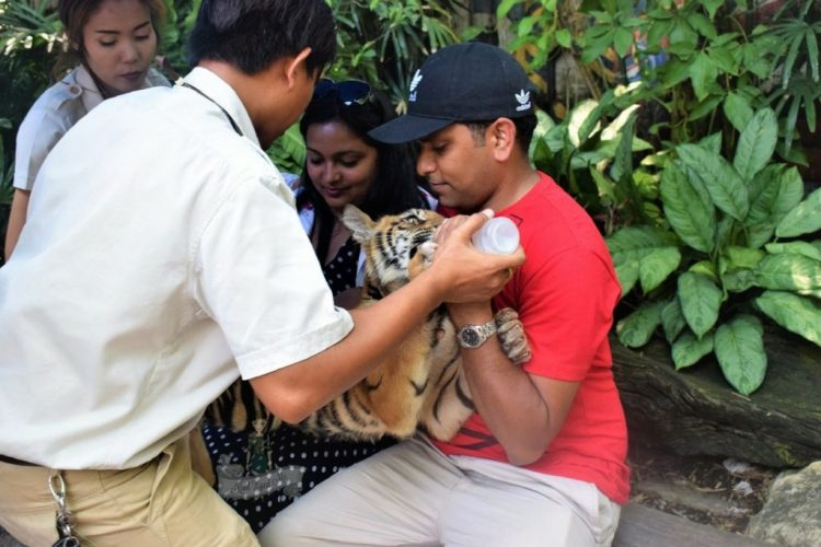 Pic with Tiger Safari World