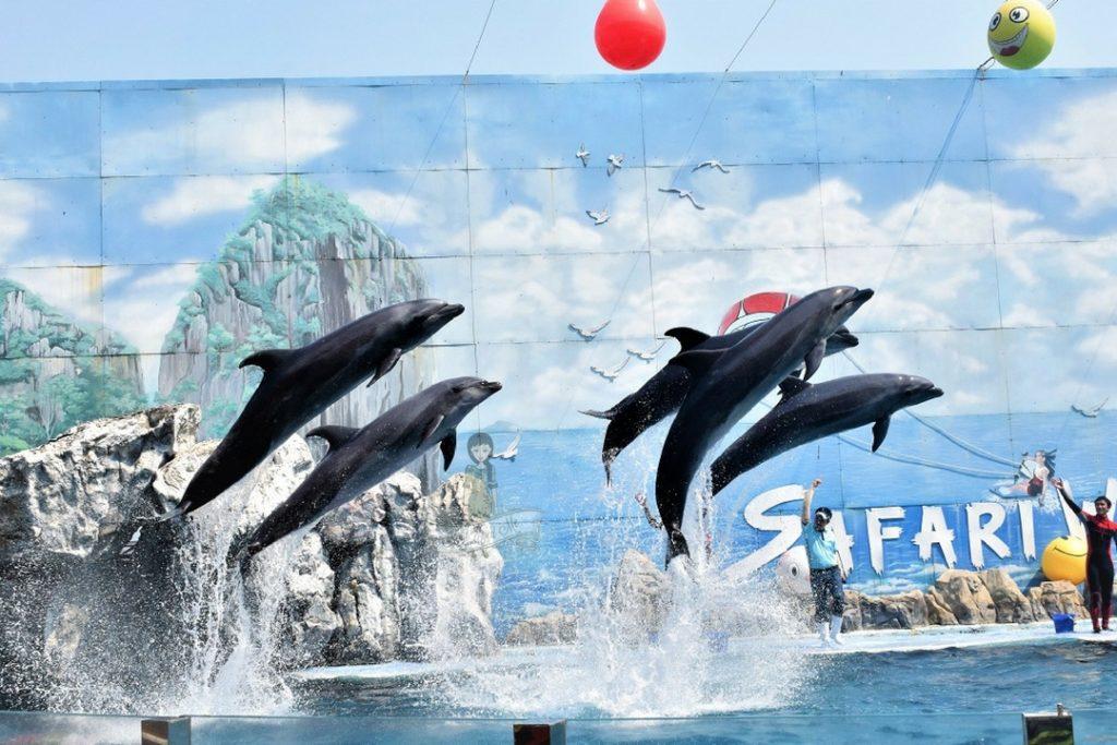 Dolphin Show Safari World, Bangkok