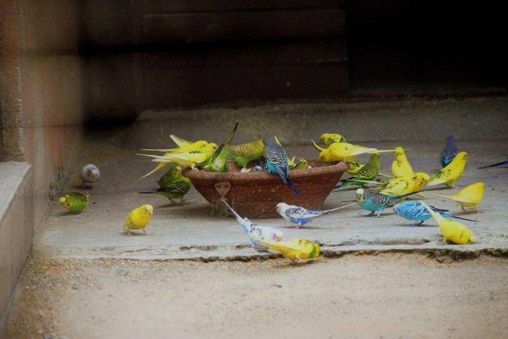 Malsi Deer Park - Dehradun Zoo Birds kohleyedme.com