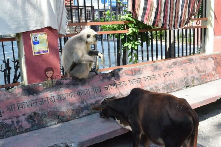 Rishikesh sightseeing
