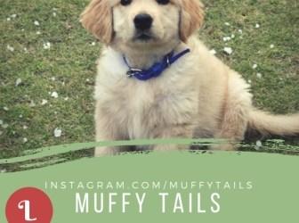 Muffytails kohleyedme.com