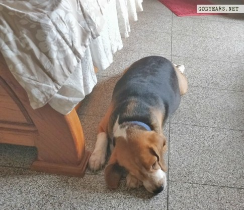 Dog sleeping position superdog superman