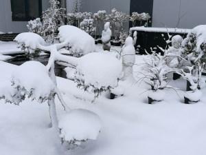 Koiteich-Winter und Pflege