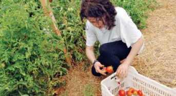 Δυνατότητες και κέρδη από την καλλιέργεια κηπευτικών
