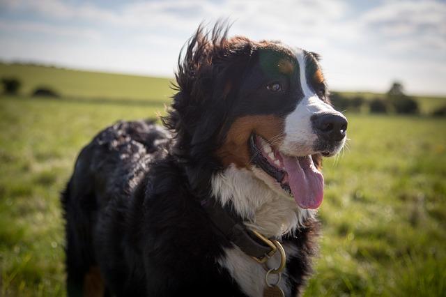 エネルギーのあふれる成犬