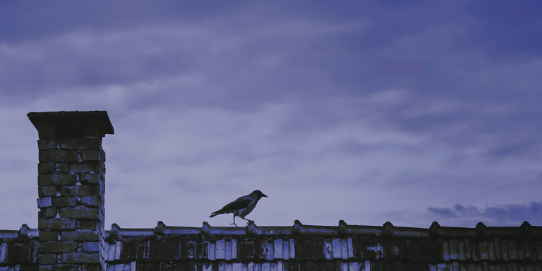 Corvids and Viruses: Story Time During Quarantine