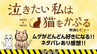 泣きたい私は猫をかぶるネタバレあり