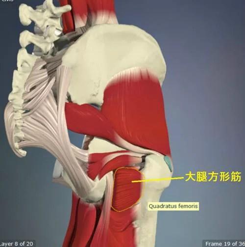 股関節外旋筋のストレッチ13