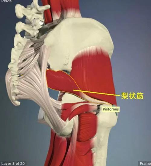 股関節外旋筋のストレッチ12