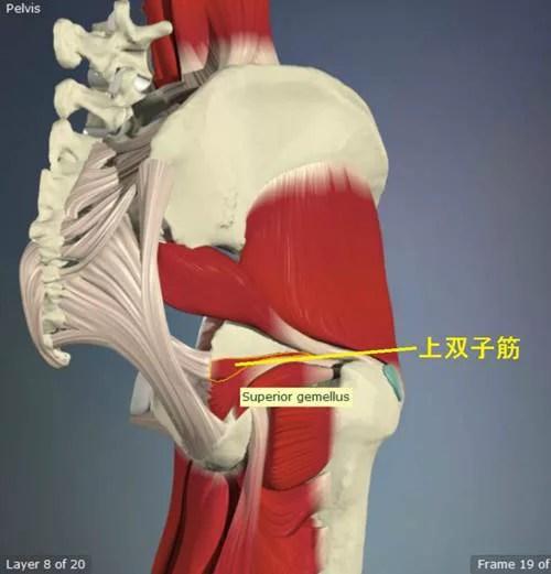 股関節外旋筋のストレッチ16