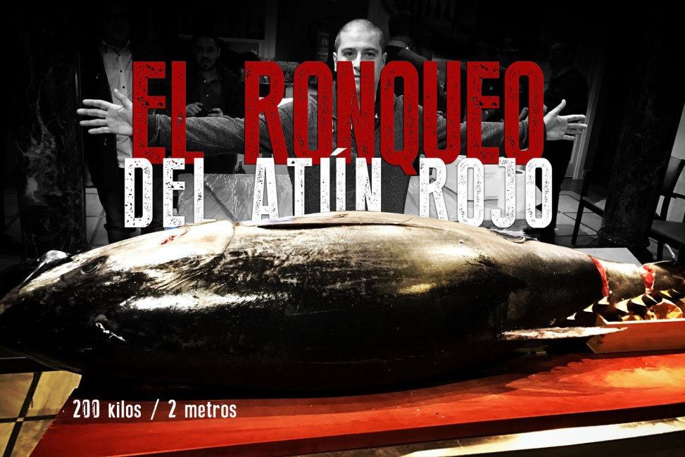 Ronqueo del atún rojo. Koketo
