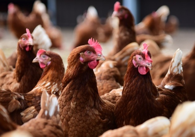 Bird Flu outbreak NCDC
