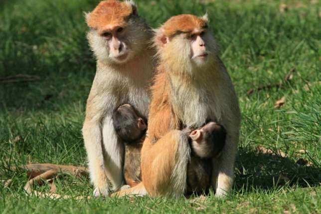 Unbelievable! Man Stoned To Death By Monkeys 2