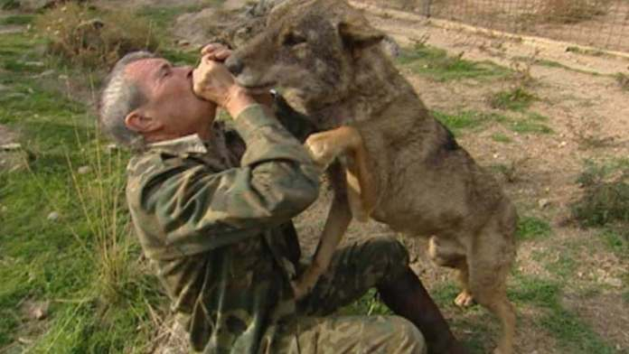 Man Raised By Wolves Says That He Is Disappointed By Human Life 6