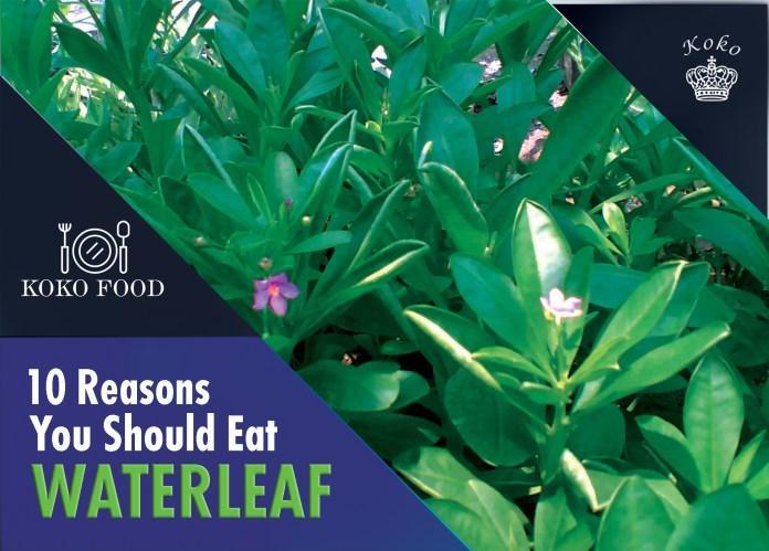 Food: 10 Reasons You Should Eat Waterleaf More