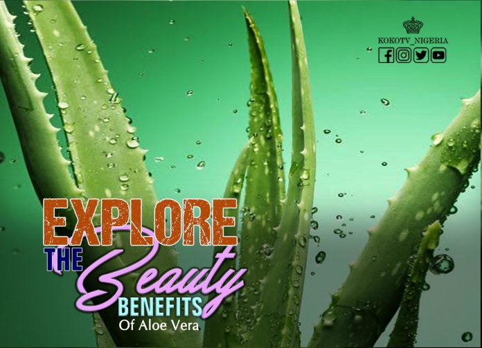 Explore The Beauty Benefits Of Aloe Vera