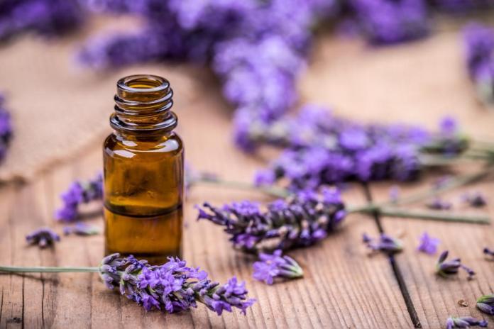 lavender essential oil koko tv ng