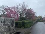 鍋島邸に咲く花