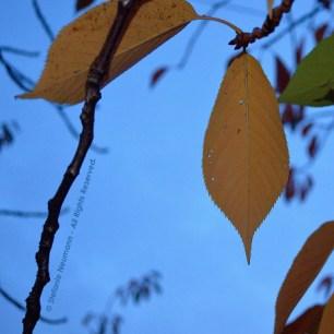 Evening Walk in Autumn 5 © Stefanie Neumann - All Rights Reserved.