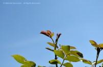 Wild Encounters LCA Osdorfer Feldmark 08 © Stefanie Neumann – Kokopelli Bee Free - All Rights Reserved; #KBFWalk #KBFPhotography