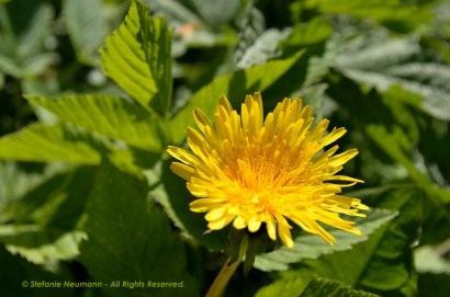 Wild Encounters LCA Osdorfer Feldmark 09 © Stefanie Neumann – Kokopelli Bee Free - All Rights Reserved; #KBFWalk #KBFPhotography