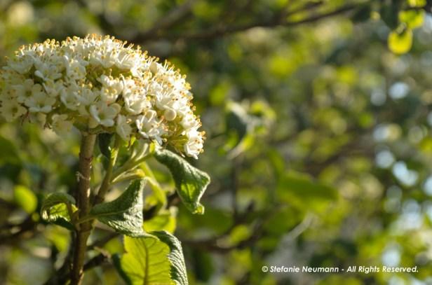 Wild Encounters LCA Osdorfer Feldmark 15 © Stefanie Neumann – Kokopelli Bee Free - All Rights Reserved; #KBFWalk #KBFPhotography